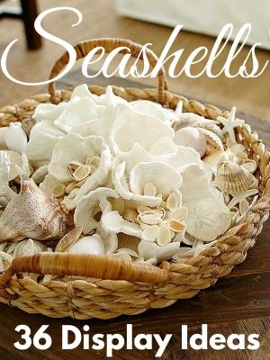 Seashell Display Ideas Shell Collections Decor