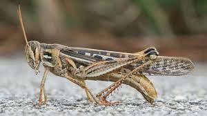 Identifikasi Serangga Penyebab membasmi hama hutan