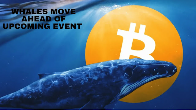 whales,bitcoin whales,whale,shiba events update,dogecoin whales,shib whales,dogecoin whales list,shiba crypto events update,making moves,whales eat,a whale nearly turned the boat over,event,bitcoin dip coming,a huge whale,a whale nearby,ethereum whales,whale watching,a whale near a boat,whale manipulation,a whale near people,this whale appeared,a whale near a person,spy on whales,whale watching crypto,giant whale,whale alert,crypto whales