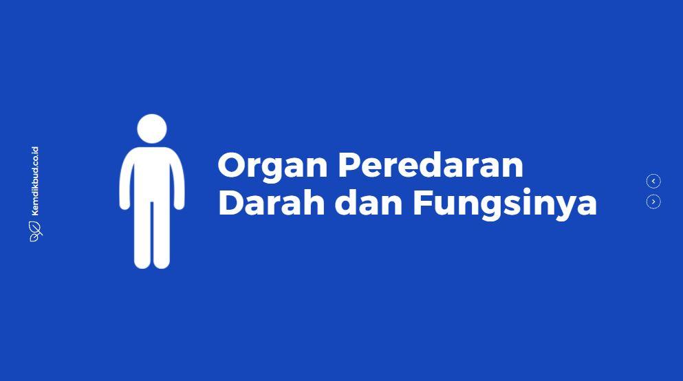mengenal organ peredaran darah dan fungsinya