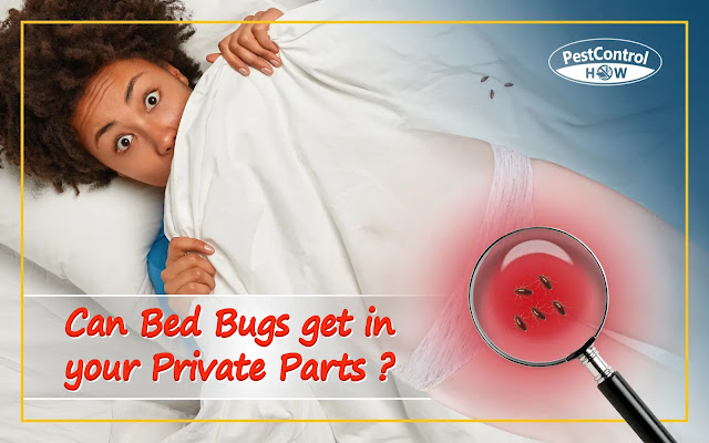 can-bed-bugs-get-in-your-private-parts