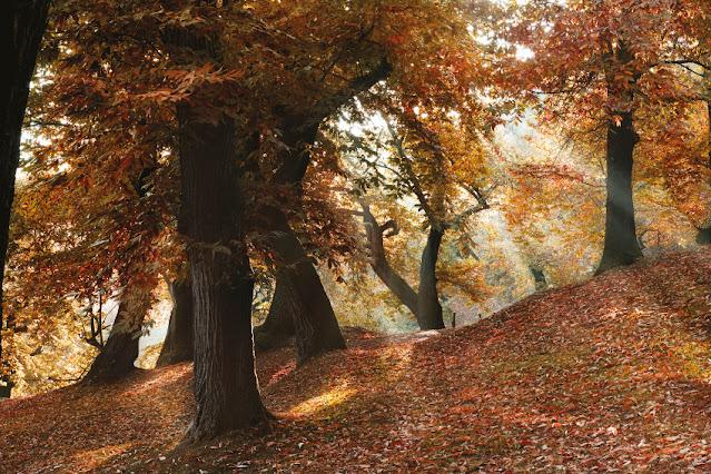 autunno foliage trentino passeggiate