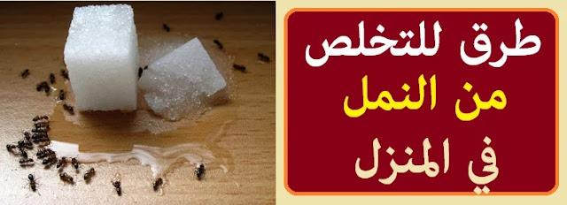 """""""كيفية طرد النمل من المنزل"""" """"طرد النمل"""" """"طرد النمل بالملح"""" """"طرد النمل بالخل"""" """"طرد النمل دون قتلة"""" """"التخلص من النمل في المنزل"""" """"طرق للتخلص من النمل في المنزل"""" """"طريقة التخلص من النمل في البيت"""" """"النمل في البيت"""" """"القضاء على النمل في البيت"""" """"طريقة القضاء على النمل"""""""