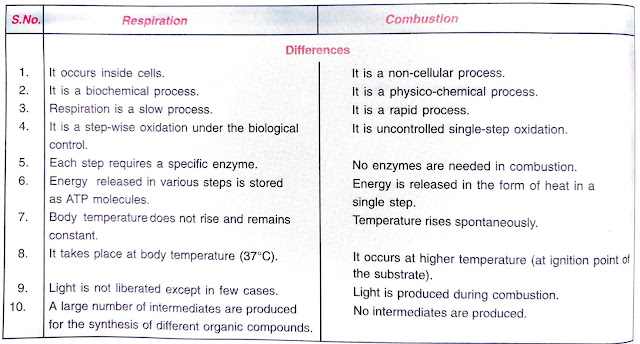 differences between respiration and combustion
