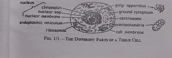 Image of cell and its parts