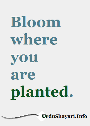 Bloom where you are planted. good morning quotes in English