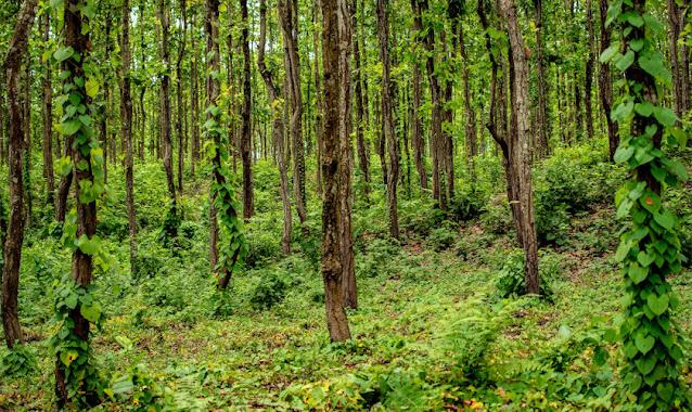 Siliguri  - Gateway of North East India