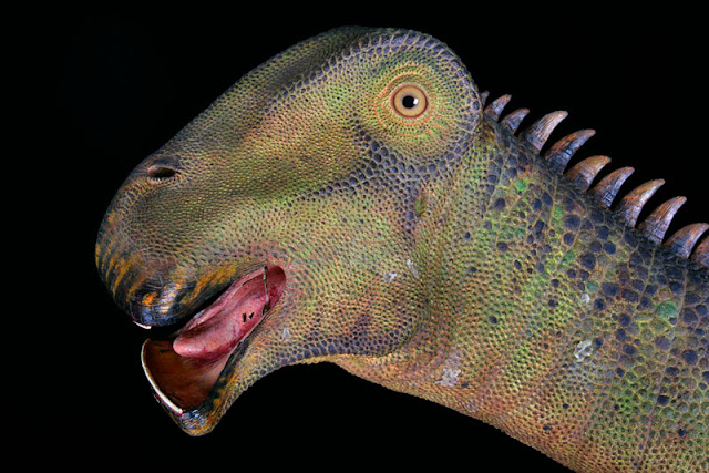 What is the Name of the Dinosaur with 500 Teeth