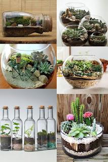الطريقة العصرية لزراعة النباتات في أحواض زجاجية والأعتناء بهم