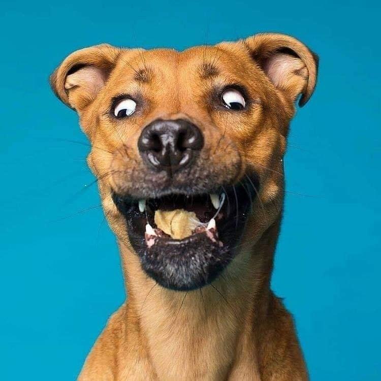 Moking dog expression