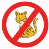 dilarang membawa hewan peliharaan kucing www.simplenews.me