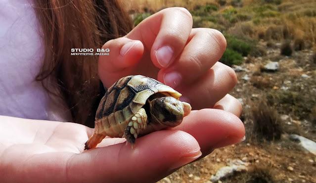Σωτήρια επέμβαση νεαρού κοριτσιού στο Ναύπλιο για ένα μικρό χελωνάκι
