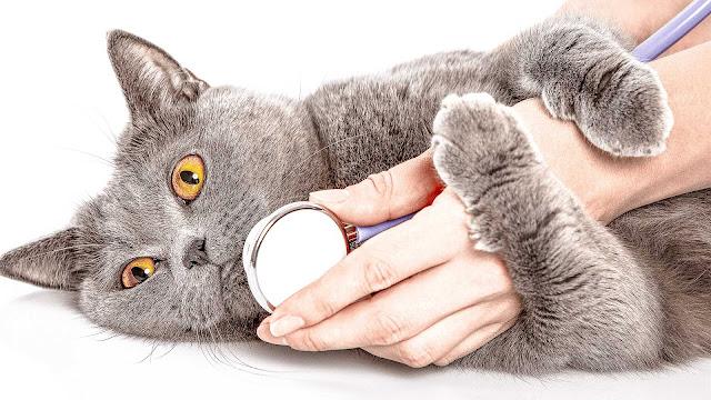 Cat Healthy food Healthy