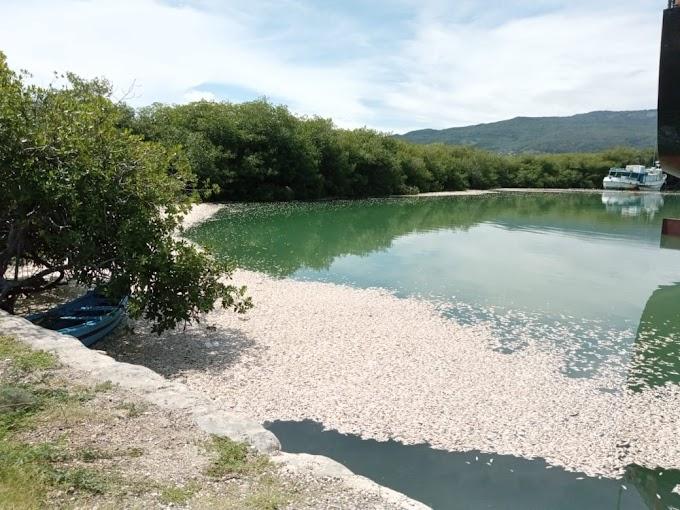Falta de oxígeno provocó la muerte de miles de sardinas en Barahona, dice Medio Ambiente