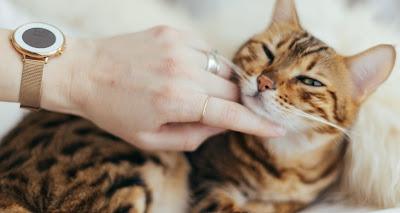 No cometas estos 5 errores en el cuidado de los gatos