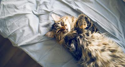 Qué dice de tu gato la posición en la que duerme