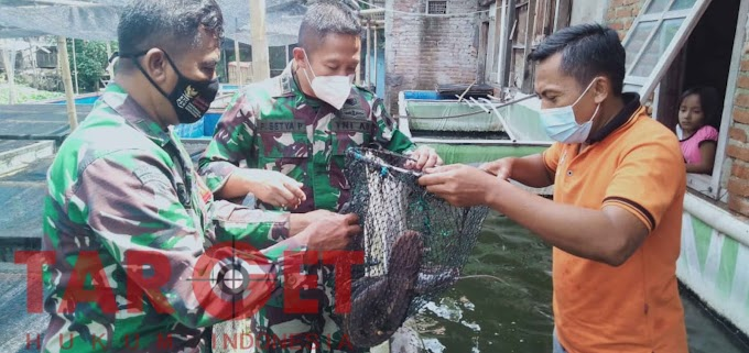 Dukung peternak Ikan Lele, Dandim 0716 Demak Berikan Motivasi Untuk Lebih Produktif