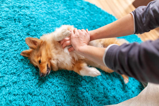 Epilepsy in Dogs – What to Watch Out For