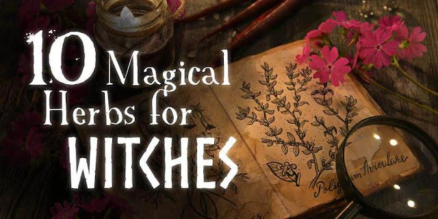 Gợi ý 10 loại thảo mộc chứa ma thuật cho tân phù thủy
